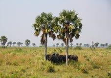 Elefanti nel selvaggio fotografia stock