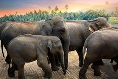 Elefanti nella giungla Immagini Stock Libere da Diritti
