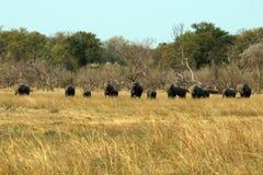 Elefanti nella savanna Fotografia Stock Libera da Diritti