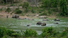 Elefanti selvaggi Fotografia Stock Libera da Diritti