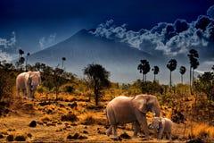 Elefanti su priorità bassa delle montagne Fotografia Stock