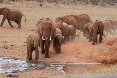 Elefanti sul movimento Immagine Stock