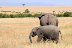 Elefanti sulla savana Fotografia Stock Libera da Diritti