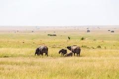 Elefanti sulla savanna Fotografie Stock