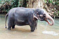 Elefanti sulla Sri Lanka Immagini Stock