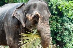 Elefanti sulla Sri Lanka Immagine Stock