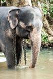 Elefanti sulla Sri Lanka Fotografie Stock Libere da Diritti
