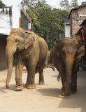 Elefanti sullo srtreet Fotografie Stock Libere da Diritti