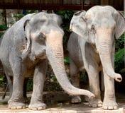 Elefanti, Tailandia Fotografia Stock Libera da Diritti