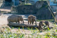 Elefanti in uno zoo all'aperto Fotografie Stock Libere da Diritti