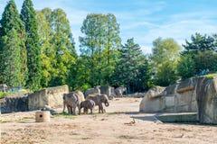 Elefanti in uno zoo all'aperto Fotografia Stock
