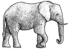 Elefantillustration, teckning, gravyr, färgpulver, linje konst, vektor Royaltyfri Illustrationer