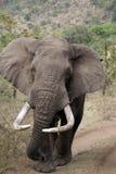 elefantkenyan arkivfoton