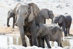 Elefantko och barn Royaltyfri Bild