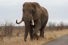 elefantkruger Arkivbilder