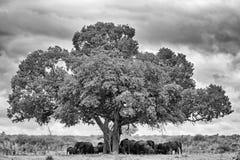 Elefantlandskap royaltyfri fotografi