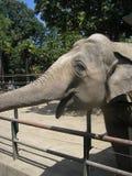 elefantleende Arkivfoton