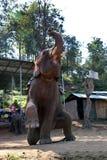 Elefantleistung in Chiang Mai, Thailand stockbilder