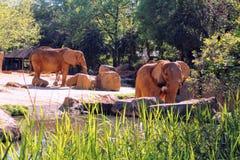 Elefantlekplats royaltyfria bilder