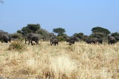 Elefantlinje Royaltyfri Bild