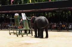 elefantmålningsshow Royaltyfria Foton