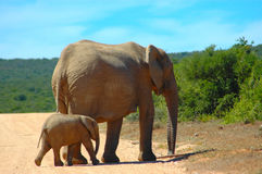 Elefantmamma lizenzfreies stockbild