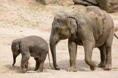 Elefantmodern med behandla som ett barn elefanten i zoo Royaltyfri Fotografi