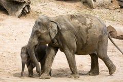 Elefantmodern med behandla som ett barn elefanten i zoo Royaltyfri Bild
