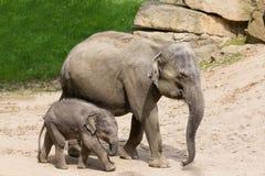 Elefantmodern med behandla som ett barn elefanten i zoo Arkivbilder