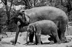 Elefantmutter mit Kind lizenzfreie stockbilder
