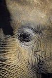 Elefantnahaufnahmeporträt des Auges und des Gesichtes Lizenzfreie Stockfotografie