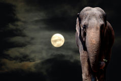 elefantnatt Arkivbilder