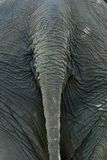 Elefantrückseite stockfotos
