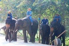 Elefantrangen för ståtar arkivfoto