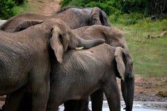 Elefantreste auf seinem Freund Lizenzfreies Stockfoto