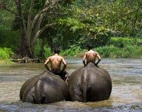 elefantridning Fotografering för Bildbyråer