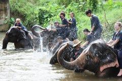 elefantridning Royaltyfria Bilder