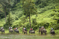 Elefantridning Arkivfoton