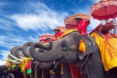 Elefants在阿尤特拉利夫雷斯历史公园,泰国 免版税图库摄影