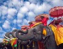 Elefants在阿尤特拉利夫雷斯,泰国 免版税图库摄影