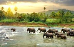 Elefants в реке Стоковое Изображение