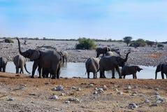 Elefants на waterhole Стоковые Изображения RF