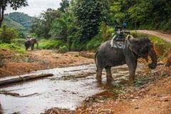 2 elefants пересекая реку в дождевом лесе святилища Khao Sok, Таиланда Стоковая Фотография RF