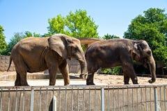 2 elefants Стоковые Изображения