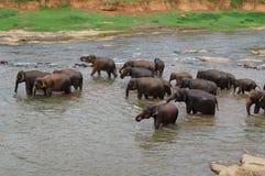 Elefants Стоковые Изображения RF