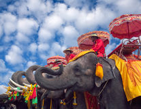 Elefants in Ayutthaya, Thailand Royalty Free Stock Photography
