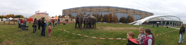 Elephants in the city Royalty Free Stock Photo