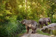 Elefants dans le zoo photo stock