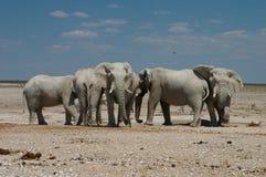 Elefants no Waterhole Imagem de Stock