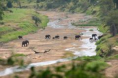 Elefants på Serengeti Arkivfoto